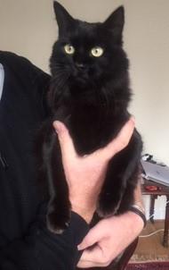Kitty Susan Arthur